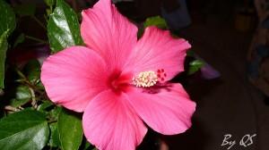 kinyílt az első virág