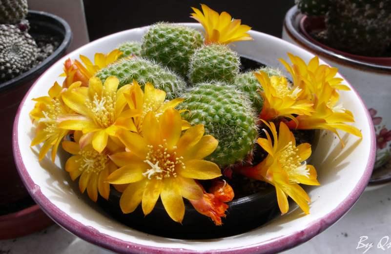 Az első virágok